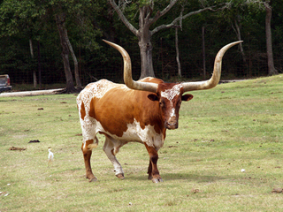 League City Bargain furniture salutes the Butler Longhorn